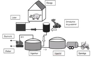 Dans la figure 1, il importe  de voir les différentes étapes d'élaboration du biogaz.